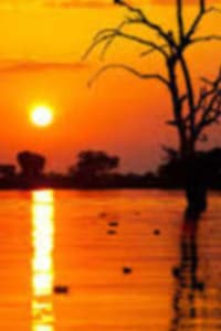 https://sealefuneral.com/wp-content/uploads/2020/12/Bayou-Sunset-1.jpg