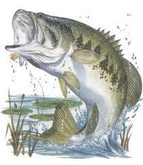 https://sealefuneral.com/wp-content/uploads/2021/07/Bass-Fish.jpg