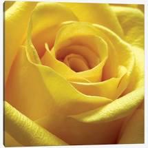 https://sealefuneral.com/wp-content/uploads/2021/07/Yellow-rose.jpg